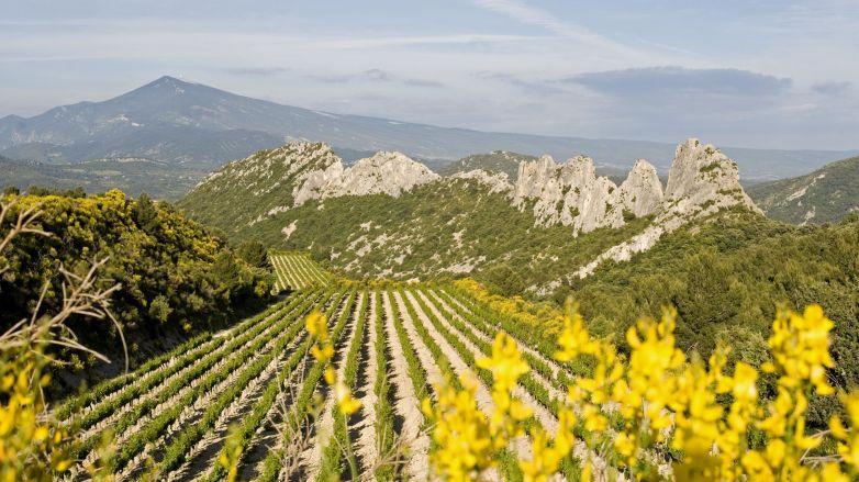 """Résultat de recherche d'images pour """"les vins de gigondas   vaucluse"""""""