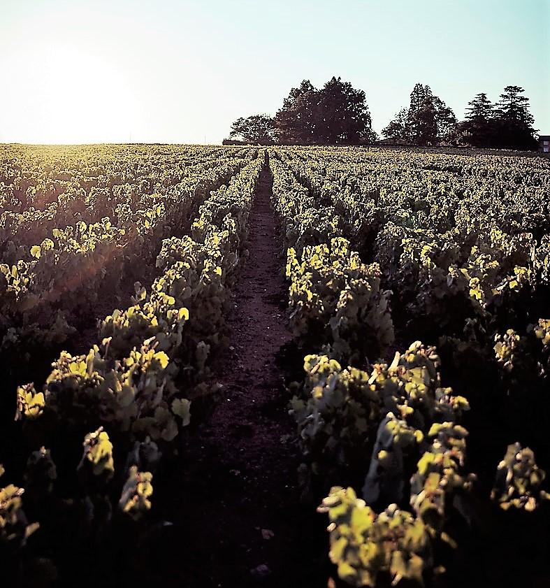 _93i4535-vines-of-saint-amour-dom-de-la-pirolette