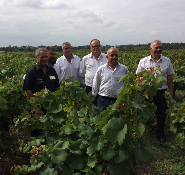 Six producers in the vines
