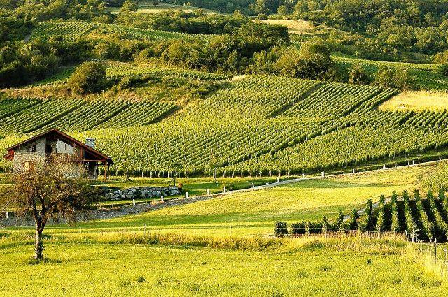 Vignes_de_l'AOC_Crémant_de_Savoie