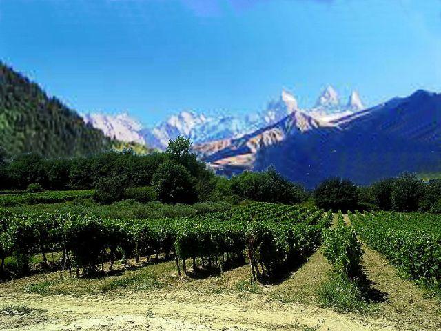 Vignoble_de_l'AOC_Crémant_de_Savoie